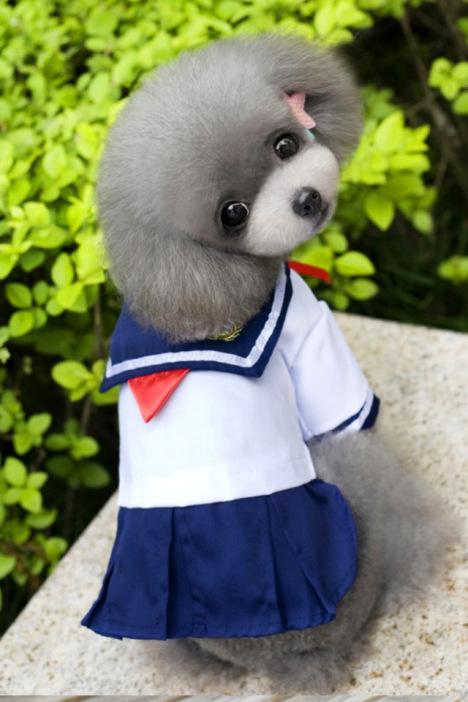 日系美少女 宠物狗狗猫咪裙子泰迪比熊博美俊介公主裙 可爱校服夏宠物