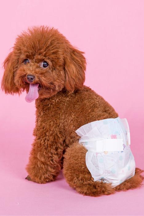 尿片尿不湿,宠物尿片,狗狗猫咪,宠物用品,上衣纸尿裤宠物制服情趣图片